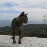 Gato del Mirador del Estrecho