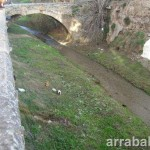 Gatos en el río Darro de Granada