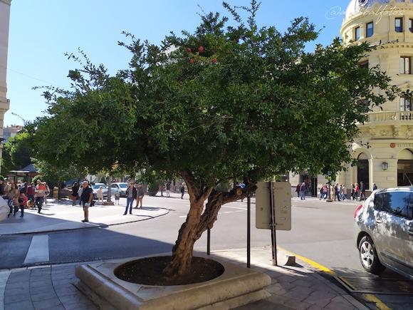 Granaillo de Puerta Real de España en granada