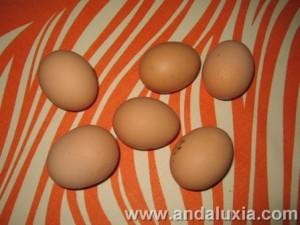 Huevos de Campo de gallinas libres